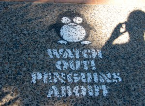 Australien_Sydney_manly_scenic_walkway_Penguins