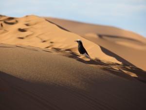 Sahara Wüste Marokko