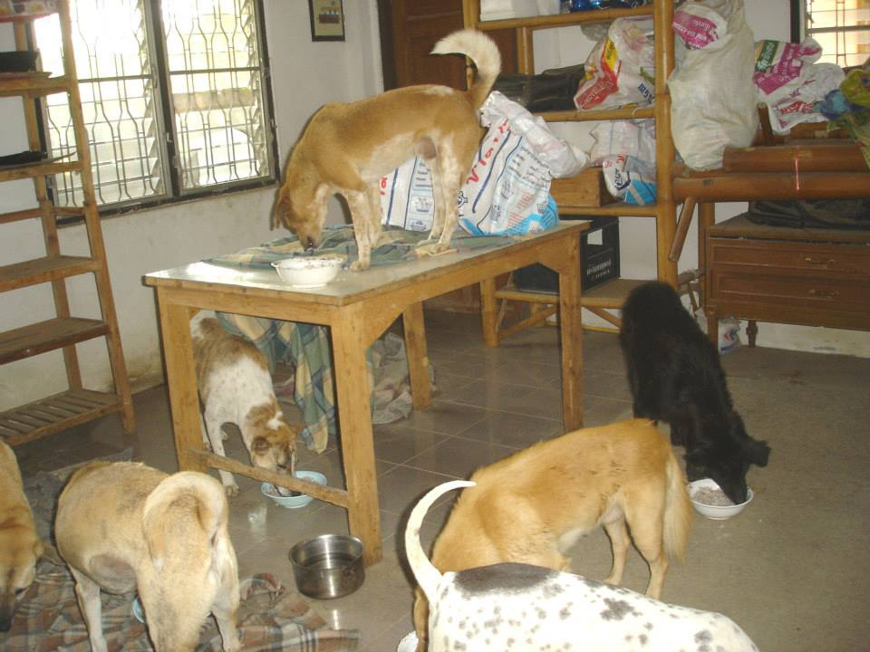 Thailand_Chiang_Mai_help_for_dogs_10
