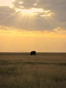Kenia_Amboseli_Safari_Elefant