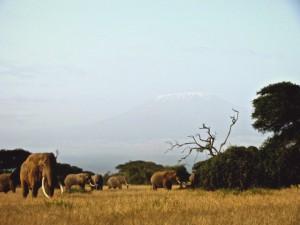Kenia_Amboseli_Safari_Elefant1