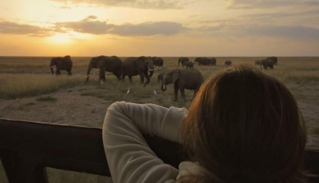 Kenya_Safari_Elefant_amboseli