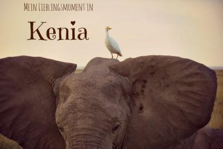 Kenia_Elefant_Amboseli
