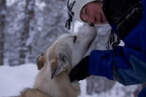 Lappland im Winter Hundeschlitten Tour