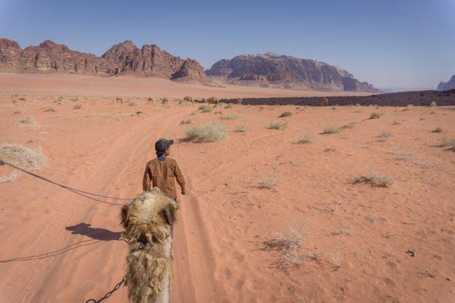 Jordanien Rundreise Urlaub Wadi Rum Kamel Wueste