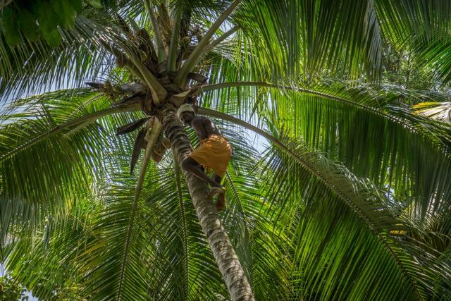 Kerala Ayurveda Südindien