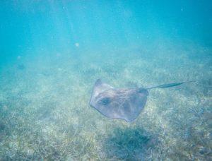 Belize Highlights nicht verpassen Schnorcheln Tauchen Karibik