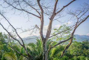 Belize Sleeping Giant Rainforest Lodge Regenwald