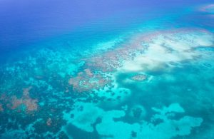 Belize Blue Hole La Beliza Island Resort Ambergris Caye