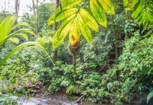 Costa Rica Monteverde Nebelwald