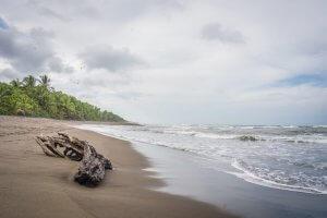 Costa Rica Tortuguero Nationalpark