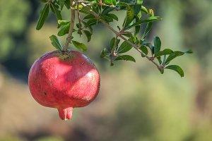 Chania Kreta Granatapfel