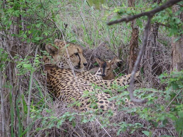 pferdesafari-suedafrika-11