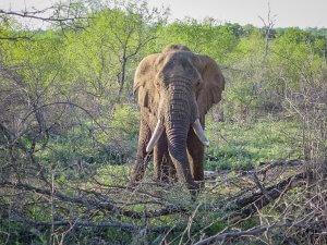 pferdesafari-suedafrika-14
