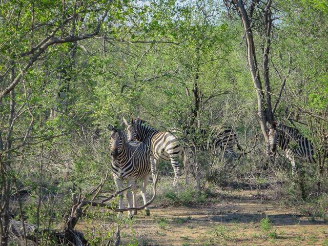 pferdesafari-suedafrika-15