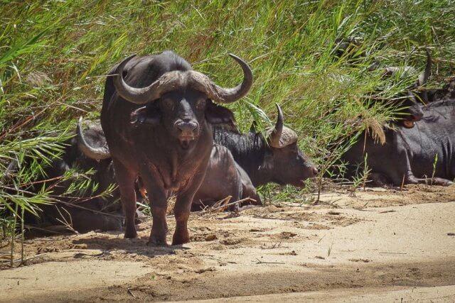 pferdesafari-suedafrika-16