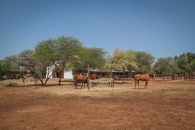 pferdesafari-suedafrika-3