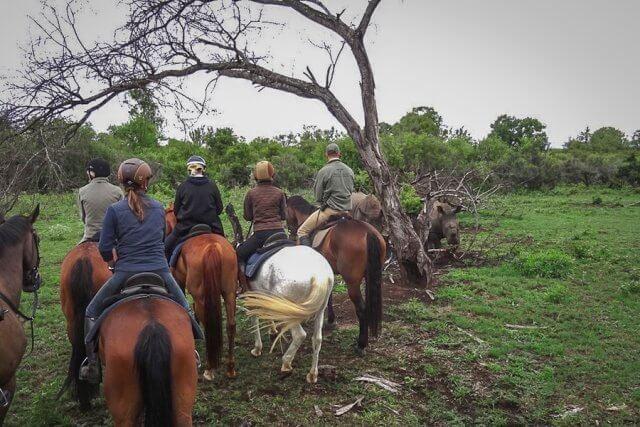 pferdesafari-suedafrika-4