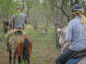 pferdesafari-suedafrika-7