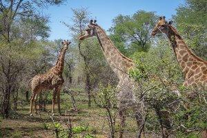 pferdesafari-suedafrika-8