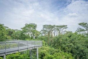 Singapur Sehenswuerdigkeiten Forest Walk Southern Ridges Trail