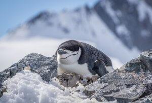Antarktis Hurtigruten Orne Harbour