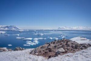 Antarktis Hurtigruten Cuverville Island