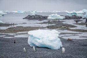 Antarktis Hurtigruten Brown Bluff