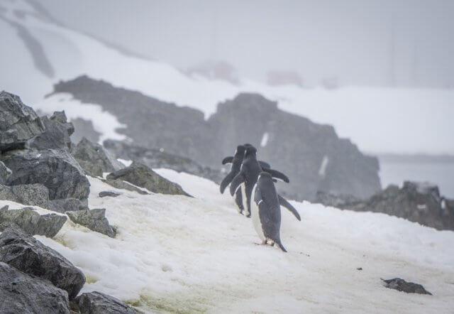 Antarktis Hurtigruten MS Midnatsol Half Moon Island