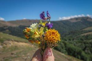 Araukania Chile Malalcahuello Wanderung