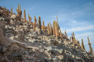 Atacamawüste Kaktustal Chile