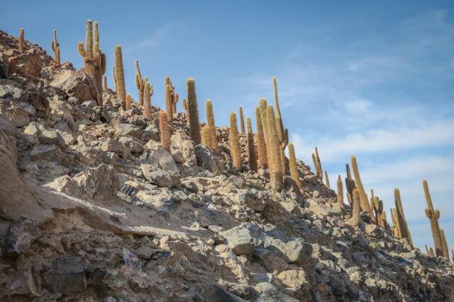 Atacamawüste Kaktustal