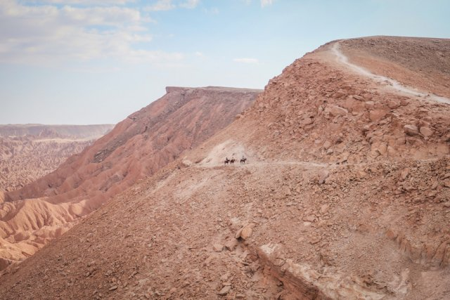 Atacamawüste Pferde