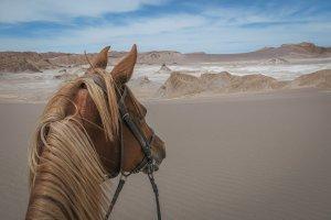 Atacamawüste Explora Reiten