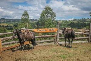 Chiloe Chile Rancho Pullao