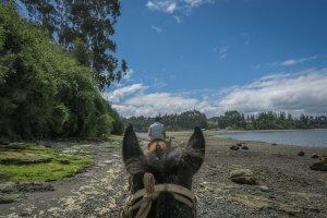Chiloe Chile Reiten Meer