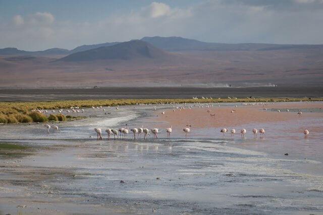 Salar de Uyuni Tour Laguna Colorada Reiseziele August Urlaub