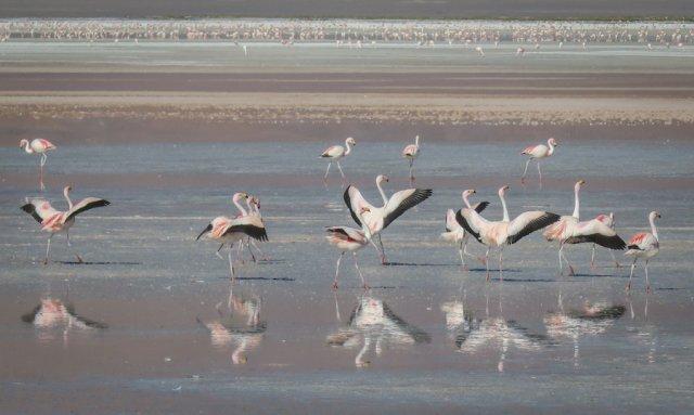 Salar de Uyuni Tour Laguna Colorada Flamingos