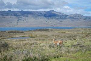 Torres del Paine Trekking Lago Sarmiento