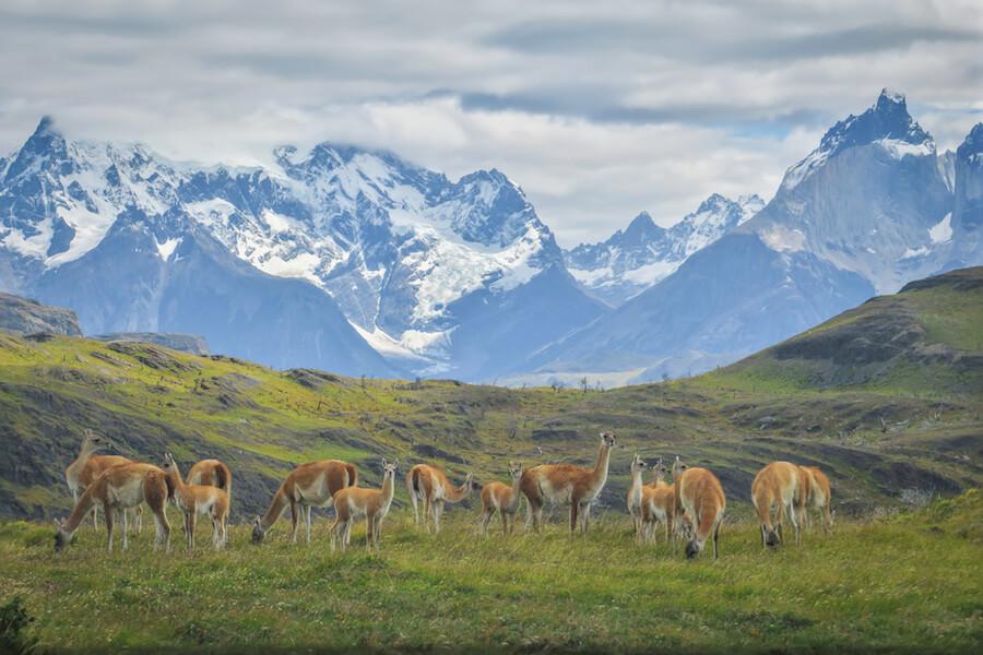 Torres del Paine Trekking Lamas