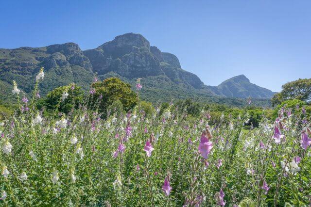 Kapstadt Urlaub Suedafrika Kirstenbosch botanischer Garten