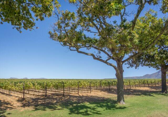 Kapstadt Urlaub Suedafrika Weingebiet