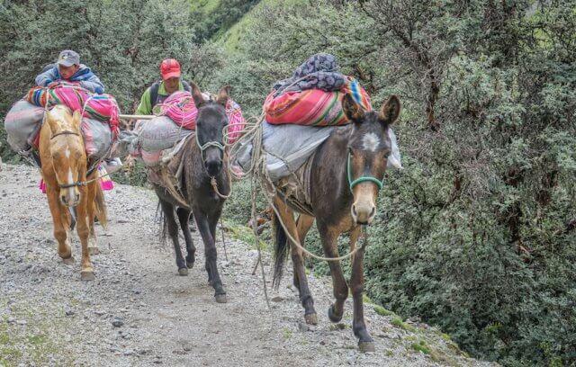 Lares Trek_Machu Picchu_Peru Esel