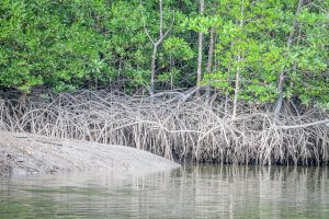 Phang Nga Thailand Mangrovenwald Talaenok Andamandiscoveries Homestay