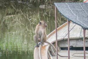 Phang Nga Thailand Affe Talaenok Dorf