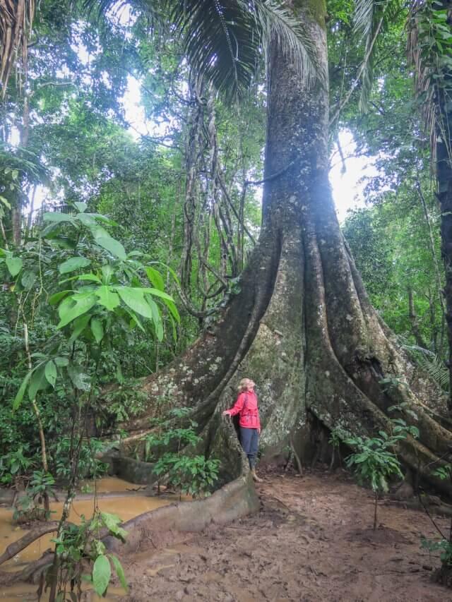 Puerto Maldonado Dschungel Peru Lima Dschungeltour