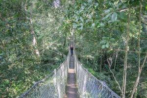 Puerto Maldonado Dschungel Peru Lima Inkaterra Reserva Amazonica Canopy Walk