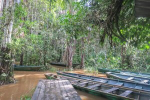 Puerto Maldonado Dschungel Peru Lima Inkaterra Amazonica Wanderung