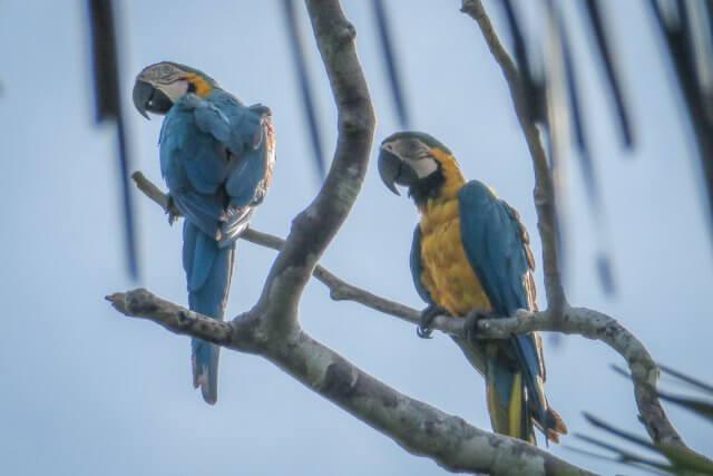 Puerto Maldonado Dschungel Peru Lima Papageien