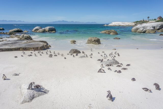 Suedafrika Boulders Beach Pinguine